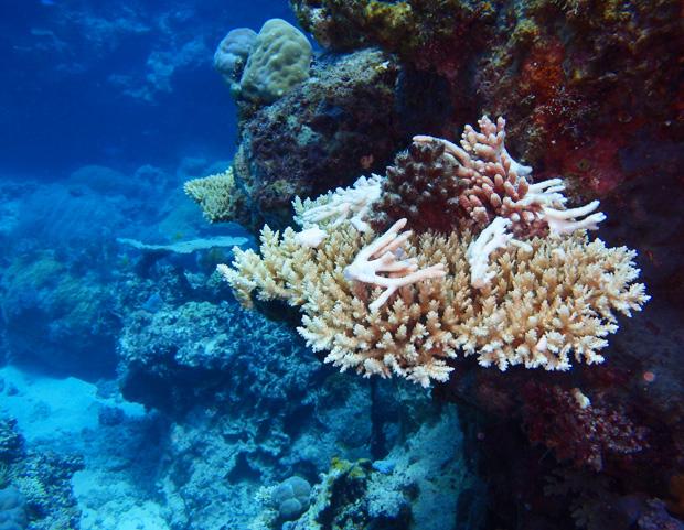 coral_2_tracycaretto