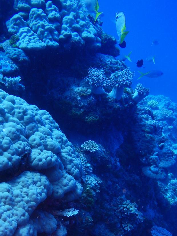 coral_3_tracycaretto